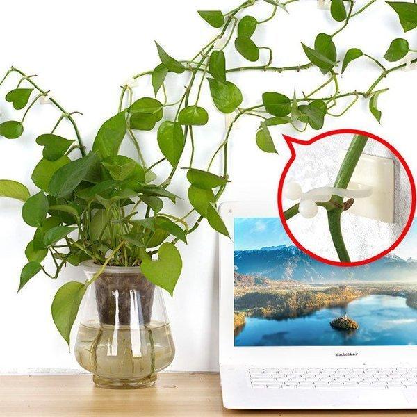 uchwyt do pnących roślin